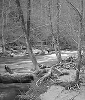 """""""Forest And Creek"""" <br /> Great Smoky Mountains National Park, Tennessee<br /> <br /> This photograph shows the good water and clean forest that are common in the Great Smoky Mountains National Park. The image works quite well in black and white, especially as a large, high resolution print where crispness adds to the mood more than in a small print."""
