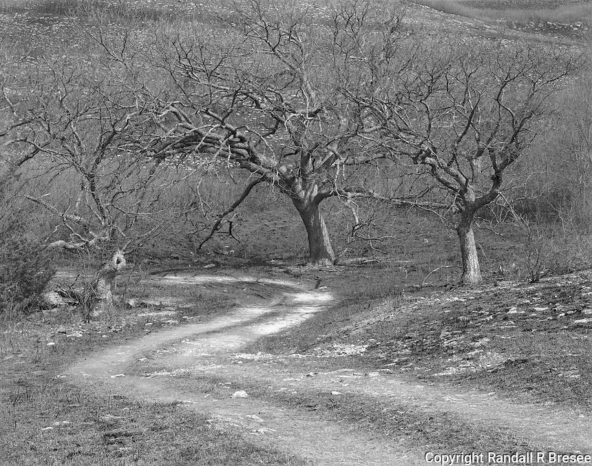 """""""Oaks and Road"""" <br /> Konza Prairie Biological Station, Kansas<br /> <br /> The Konza Prairie occupies 8,600 acres in the Flint Hills of northeastern Kansas. The Nature Conservancy and Kansas State University own and operate the preserve. This photograph shows a road that winds through a beautiful grove of oak trees."""