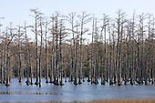 NR Goodale State Park outside of Camden, SC.
