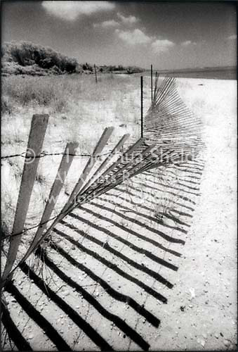 Collapsed dune fence and its shadow<br />