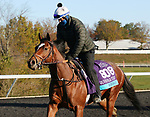 Ebeko, trained by trainer Peter Miller, exercises in preparation for the Breeders' Cup Juvenile Turf at Keeneland Racetrack in Lexington, Kentucky on November 2, 2020.