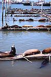 Sea lions rest on platforms at Ensenada harbor. Baja California