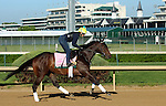 LOUISVILLE, KY - APRIL 24: Carina Mia (Malibu Moon x Miss Simpatia, by Southern Halo) gallops on the track at Churchill Downs while training for the Kentucky Oaks. Owner Three Chimneys Farm LLC, trainer William I. Mott. (Photo by Mary M. Meek/Eclipse Sportswire/Getty Images)