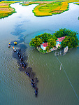 """Pictured : Farmers herd their buffalo across past lush green landscapes on the Trà Khúc river in Vietnam after a day of grazing.<br /> <br /> The images were captured by Trung Anh close to the city of Quảng Ngãi.<br /> <br /> Trung said, """"The grassland lies on the other side of the river to their stables, so everyday, at 2pm, they are led across to graze.""""<br /> <br /> """"It takes about three boats and six people to herd them safely across.""""<br /> <br /> <br /> Please byline: Trung Anh/Solent News<br /> <br /> © Trung Anh/Solent News & Photo Agency<br /> UK +44 (0) 2380 458800"""