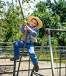 Backyard tree swing, San Luis Obispo, California