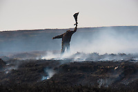 Burning heather moorland, Stanhope, Durham.