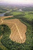 Espirito Santo, Brazil. Aracruz company's eucalyptus and pine plantations on land once Atlantic Rainforest (Mata Atlantica).