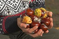 Gewöhnliche Rosskastanie, Roßkastanie, Kind mit gesammelten Kastanien, Ross-Kastanie, Roß-Kastanie, Kastanie, Aesculus hippocastanum, Horse Chestnut, Marronnier d`Inde