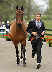 LEXINGTON, KY - APRIL 27: #82 Mclovin and rider Ryan Wood jog before the vets and grand jury during the first horse inspection for the Rolex Three Day Event on Wednesday April 27, 2016 in Lexington, Kentucky. (Photo by Candice Chavez/Eclipse Sportswire/Getty Images)