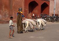 Indien, Uttar Pradesh, Agra, Esel bei Jama Masjid