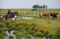 "URUGUAY Salto , Gauchos auf Pferd treiben eine Rinderherde | .URUGUAY  Salto , Gauchos ( cowboys ) ride on horse and cows  .| [ copyright (c) Joerg Boethling / agenda , Veroeffentlichung nur gegen Honorar und Belegexemplar an / publication only with royalties and copy to:  agenda PG   Rothestr. 66   Germany D-22765 Hamburg   ph. ++49 40 391 907 14   e-mail: boethling@agenda-fototext.de   www.agenda-fototext.de   Bank: Hamburger Sparkasse  BLZ 200 505 50  Kto. 1281 120 178   IBAN: DE96 2005 0550 1281 1201 78   BIC: ""HASPDEHH"" ,  WEITERE MOTIVE ZU DIESEM THEMA SIND VORHANDEN!! MORE PICTURES ON THIS SUBJECT AVAILABLE!! ] [#0,26,121#]"
