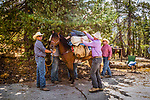 The guys loading the gear onto the  horses. Sierra National Forest, on the western slope of the Sierra Nevada, California