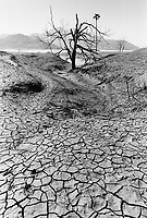 India, Narmada River, Narmada dams and protest movement of NBA Narmada Bachao Andolan, movement to save the Narmada river, and affected Adivasi in their villages, village Manibeli in February 1994, dead tree and cracked soil