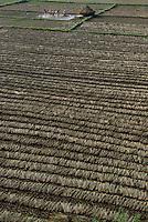 NEPAL, Terai, Tandi, the Terai is the grain basket of the country, rice farming, harvest, men winnowing paddy to sparate chaff from grain / NEPAL, Terai, Tandi, das terai ist die Kornkammer Nepals, Reisernte, die Spreu vom Reiskorn trennen