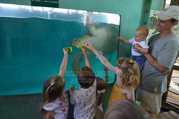 Rescue and rehabilitation center, Sea Turtle, Inc., South Padre Island, Texas, USA