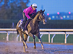 October 28, 2015 :   Riker, trained by Nicholas Gonzalez and owned by Tucci Stables, exercises in preparation for the Sentient Jet Breeders' Cup Juvenile at Keeneland Race Track in Lexington, Kentucky on October 28, 2015. Scott Serio/ESW/CSM