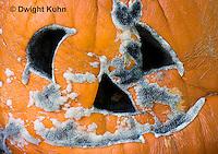 DC09-588z   Bread Mold growing on Pumpkin Jack-o-Lantern, Rhizopus stolonifer