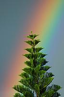 Rainbow The Big Island of Hawaii, Pacific Ocean