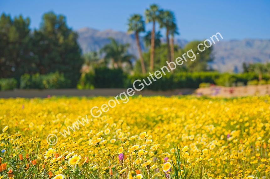 Shallow focus shot of desert wild flower field