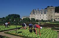 Europe/France/Centre/Indre-et-Loire/Vallée de la Loire/Villandry : Les jardiniers dans les jardins du Château de Villandry