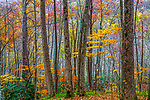 Autumn colors, Smoky Mountains, North Carolina