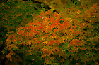 October 31, 2016; Fall color (Photo by Matt Cashore/University of Notre Dame)