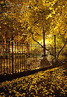AVAILABLE FROM JEFF AS A FINE ART PRINT<br /> <br /> THIS PHOTO IS AVAILABLE FOR COMMERCIAL AND EDITORIAL LICENSING FROM GETTY IMAGES<br /> <br /> Please search for image # 10149895 on www.gettyimages.com<br /> <br /> Autumn Foliage in Gramercy Park at Night, New York City, New York State, USA