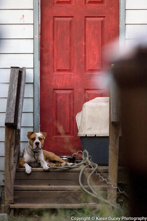 A chained dog in Tacoma, Wash.  (photo Karen Ducey)