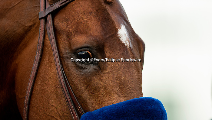 December 26, 2020: Charlatan after winning the Malibu Stakes at Santa Anita Park in Arcadia, California on December 26, 2020. Evers/Eclipse Sportswire/CSM