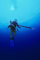spearfisherman with good catches, using powerheads or bang sticks, off Tampa, Florida, USA, Gulf of Mexico, Caribbean Sea,  Atlantic Ocean, Model Released - MR#: 000013