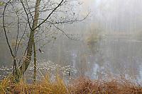 Moor, Sumpf in Nord-Deutschland, Moorlandschaft, Moorweiher, Moortümpel im Nebel, Nebelstimmung im Herbst, Herbststimmung