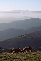 """Europe/France/Aquitaine/64/Pyrénées-Atlantiques/Pic d'Artzamendi: Panorama et Pottoks (prononcé """"Pottiok"""")"""