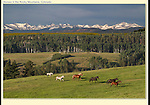 Photo composite of wild horses and the Indian Peaks Wilderness Area. I've been working with Photoshop for 15+ years. John offers both private instruction and photo tours in and around Boulder. .  John leads private photo tours in Boulder and throughout Colorado. Year-round Colorado photo tours.