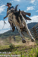 bucked up Cowboys working and playing. Cowboy Cowboy Photo Cowboy, Western fine art prints and photographs of the western lifestyle by western photographer Jess Lee.