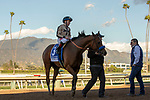ARCADIA, CA JANUARY 21:  #3 Marley's Freedom, ridden by Drayden Van Dyke, receives congratulations from assistant trainer Jimmy Barnes after winning  the Santa Monica Stakes (Grade ll) on February 16, 2019, at Santa Anita Park in Arcadia, CA. (Photo by Casey Phillips/Eclipse Sportswire/CSM)