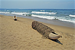 Dugout Canoe On Chombe Beach With Rope