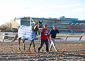 With the Aqueduct grandstand in the distance, Jackson Bend heads back to Nick Zito's barn on the backside accompanied by assistant Tim Poole.