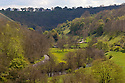 Monsal Dale showing new spring growth, Peak District National Park, UK. May.