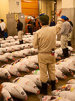 Bidding at the Tsukiji Fish Market
