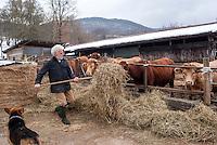 Pozzallo frazione di Romagnese (Pavia). Cooperativa Agricola Canedo: allevamento semibrado di bovini da carne. Franco nutre le mucche col fieno --- Pozzallo Romagnese (Pavia). Canedo Agricultural Cooperative: semi-wild breeding of beef cattle. Franco feeding the cows with hay