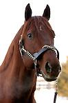 17 January 2010.   Kentucky Stallion Farms.  Visionaire at Crestwood Farm.