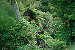 Red Deer Stag in native forest. Manawatu/Whanganui Region. New Zealand.