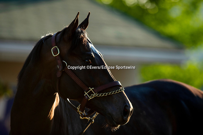 April 27, 2021 Rock Your World gets a bath at Churchill Downs in Louisville, Kentucky on April 27, 2021. EversEclipse Sportswire/CSM
