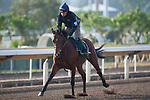 SHA TIN,HONG KONG-DECEMBER 08 : Danehill Kodiac,trained by Richard Hannon,exercises in preparation for the Hong Kong Vase at Sha Tin Racecourse on December 8,2017 in Sha Tin,New Territories,Hong Kong (Photo by Kaz Ishida/Eclipse Sportswire/Getty Images)