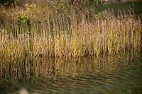 Grasses at the edge of Spencer Lake catch the evening light and are reflected in the rippling water.