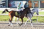 NEW ORLEANS, LA - FEBRUARY 25: Guest Suite, ridden by Robby Albarado,  Risen Star Stakes race on Risen Star Stakes Day at Fair Grounds Race Course on February 25, 2017 in New Orleans, Louisiana. (Photo by Jarrod Monaret/Eclipse Sportswire/Getty Images)