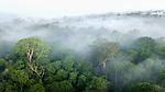 Aerial view of lowland Amazonia rainforest just after sunrise. Manu Biosphere Reserve, Amazonia, Peru.