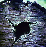 Crack in tree trunk<br />