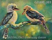 Simon, REALISTIC ANIMALS, REALISTISCHE TIERE, ANIMALES REALISTICOS, innovativ, paintings+++++SueGardner_Kookaburra,GBWR365,#a#, EVERYDAY