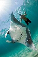 snorkerler and giant oceanic manta ray, Manta birostris, offshore, Palm Beach, Florida, USA, Atlantic Ocean